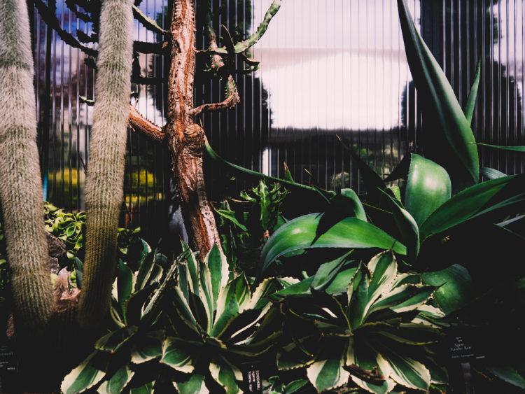 Botanic Royal Gardens Hamilton