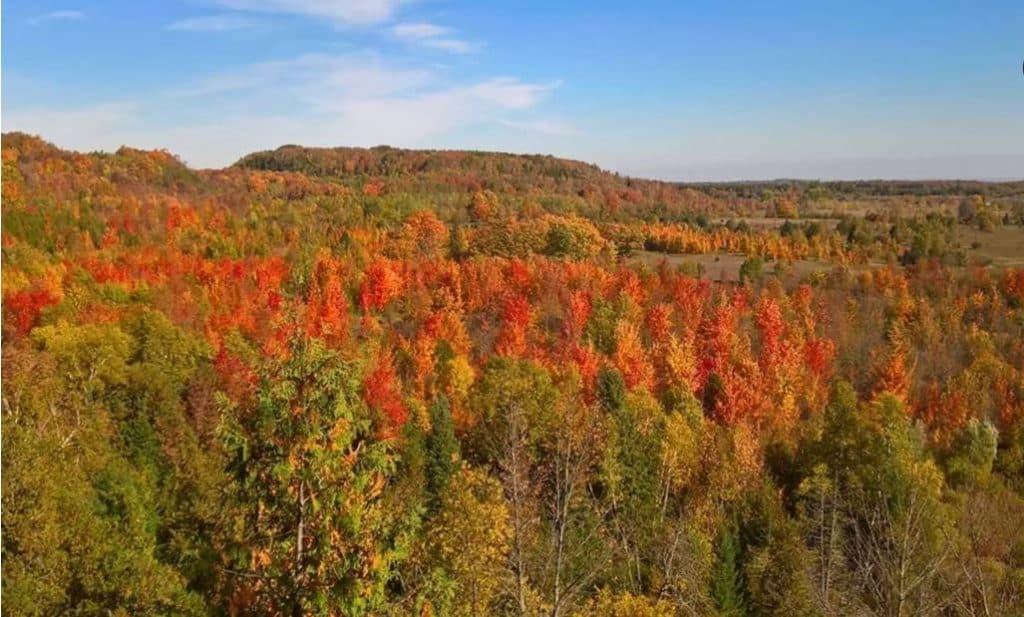 Mono cliff automne